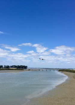 Planes flying into Auckland were a constant sound track