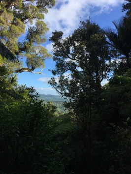 View up in the Hunua Ranges