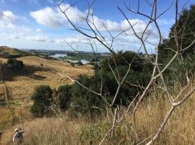 Views to the Waikato River