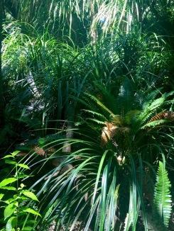 beautiful undergrowth