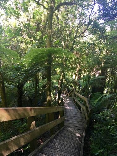 Easy but steep flights of steps down to Brownlee Road