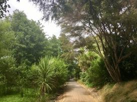 Beautiful plants line the river walk