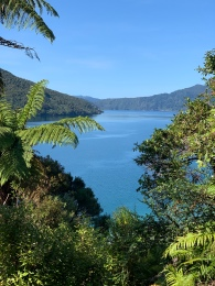 Kerry overlooking Endeavour Inlet