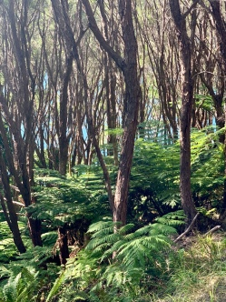 Views to the aquamarine waters through smaller beech and ferns